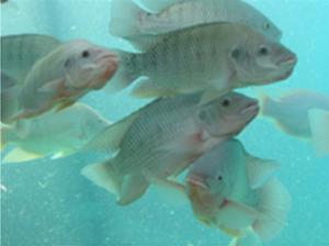 happy-fish
